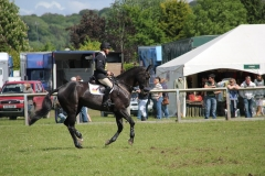 Cavaliers Dream, Hambledon 2011